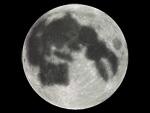 moon_usagi.jpg